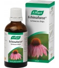 ECHINAFORCE GOTAS 50ml. vogel