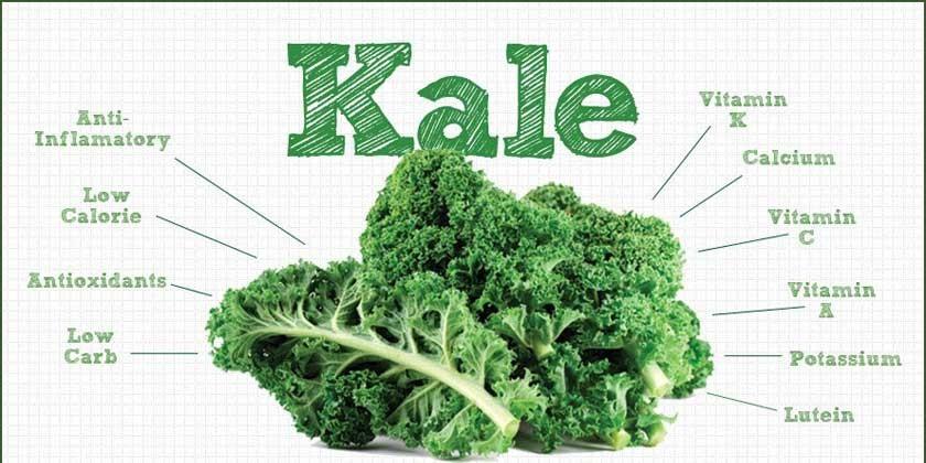 KALE, ¿conoces esta Col Rizada?